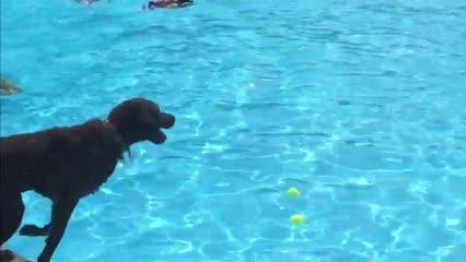 Doggie Dip Day at Inskip swimming pool