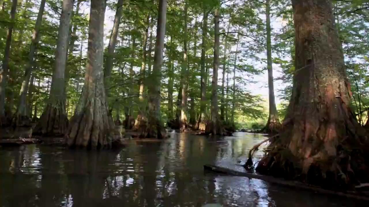 Lost Swamp Trail Time Lapse