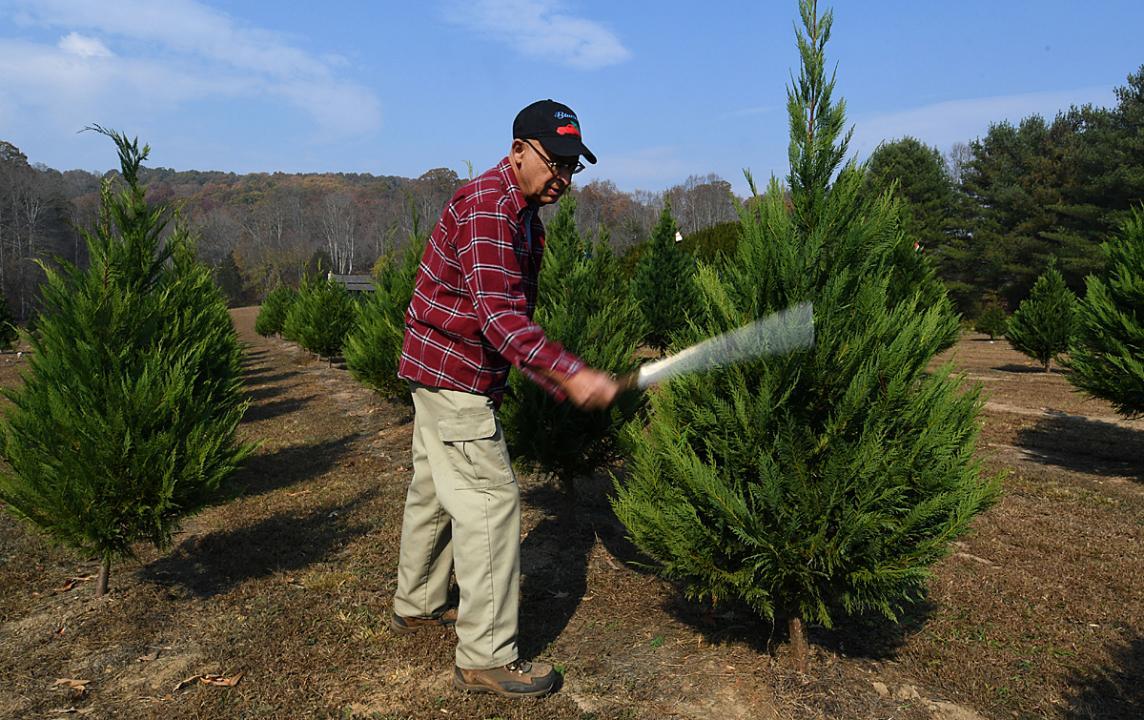 leo collins bluebird christmas tree farm owner talks about drought - Bluebird Christmas Tree Farm