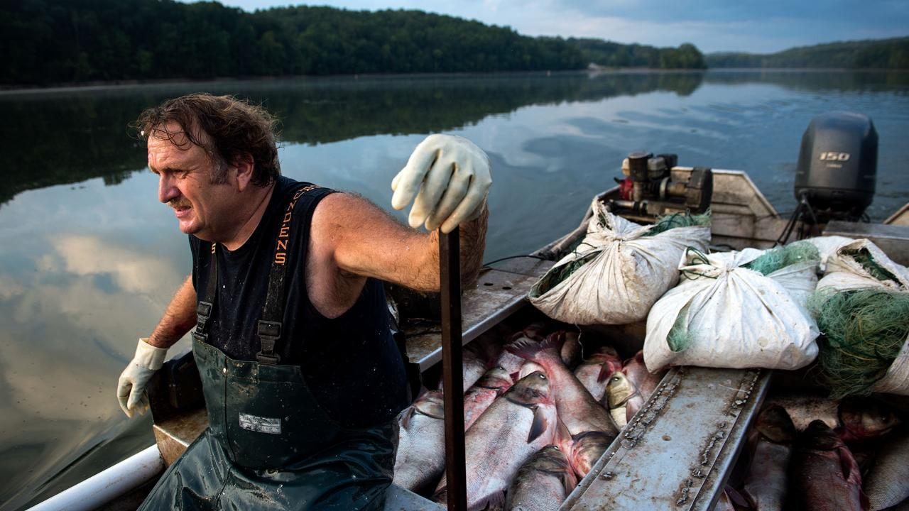 Commercial Fishing In Tennessee