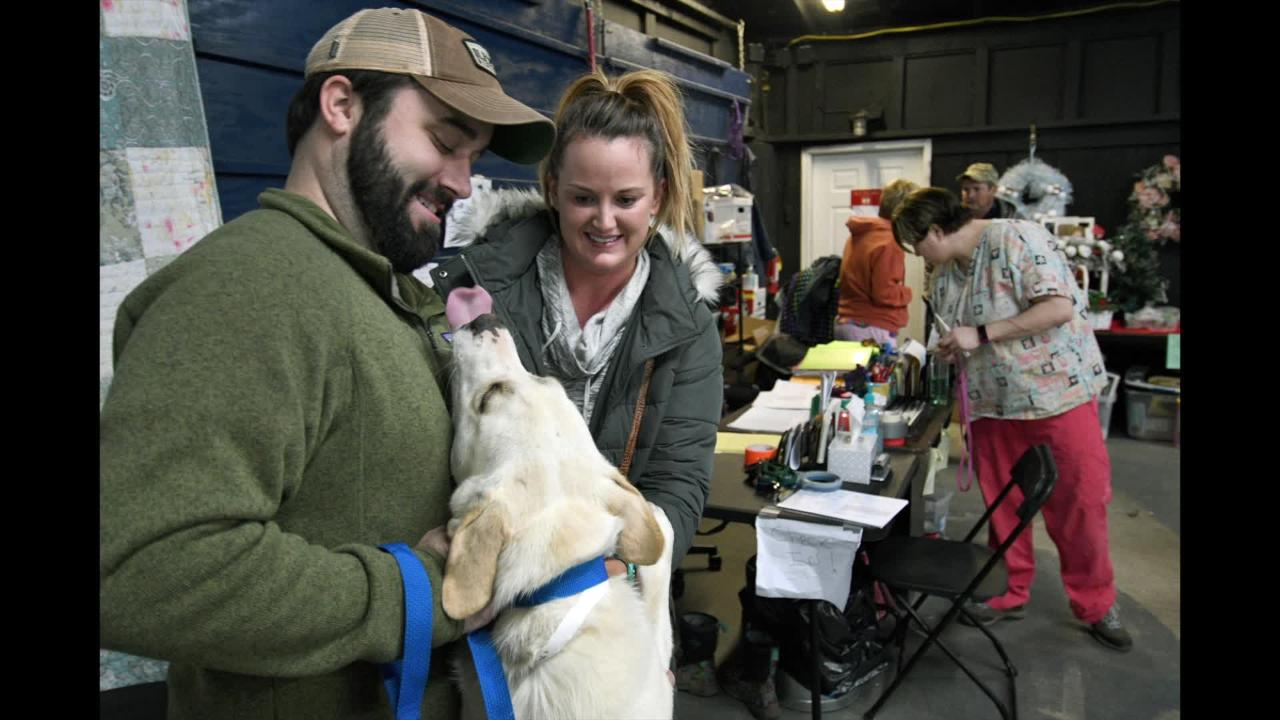 Maryville couple adopts stray from Gatlinburg wildfires