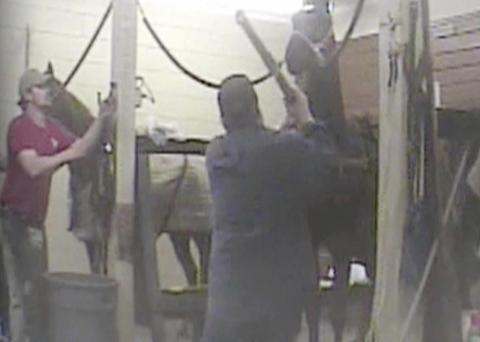 Humane Society releases graphic and disturbing video of soring at TN Walking Horse barn