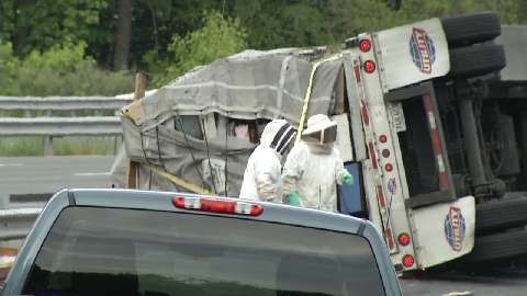 Millions of bees swarm after truck overturns in Delaware