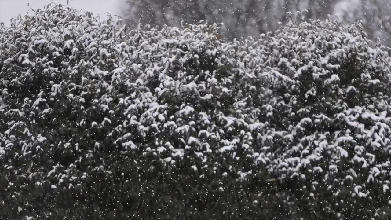 Raw Video: Snow falls in Hockessin Tuesday morning.