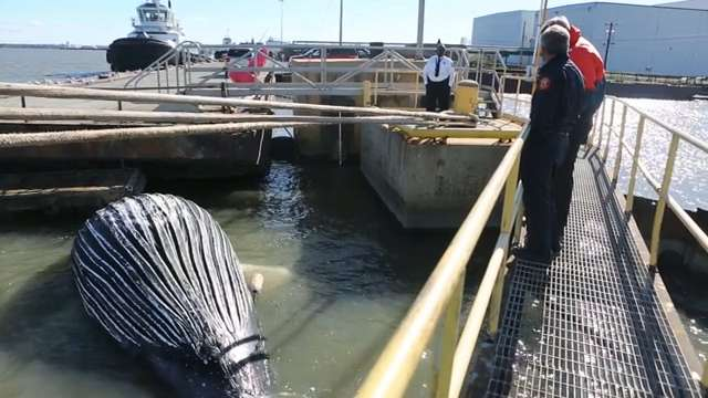 Dead whale found at the Port of Wilmington
