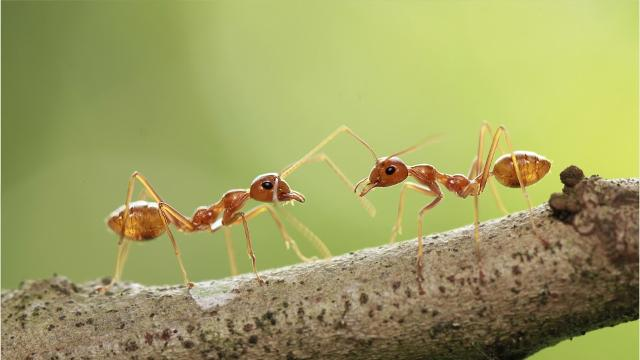 Red fire ants found in Sussex County