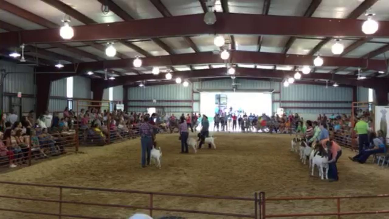 Youths in the intermediate division display their goats during the showmanship event Wednesday at the Crawford County Fair.