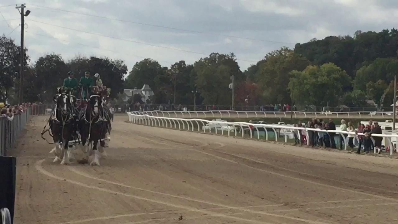 Budweiser Clydesdales performed for a crowd on Tuesday. Upcoming shows are scheduled at the Fairfield County Fair on Wednesday at 4:30 p.m., Thursday at 6 p.m., Friday at 5 p.m. and Saturday at 1:30 p.m.