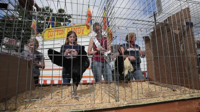The finals of the rooster crowing competition at the Muskingum County Fair on Friday.