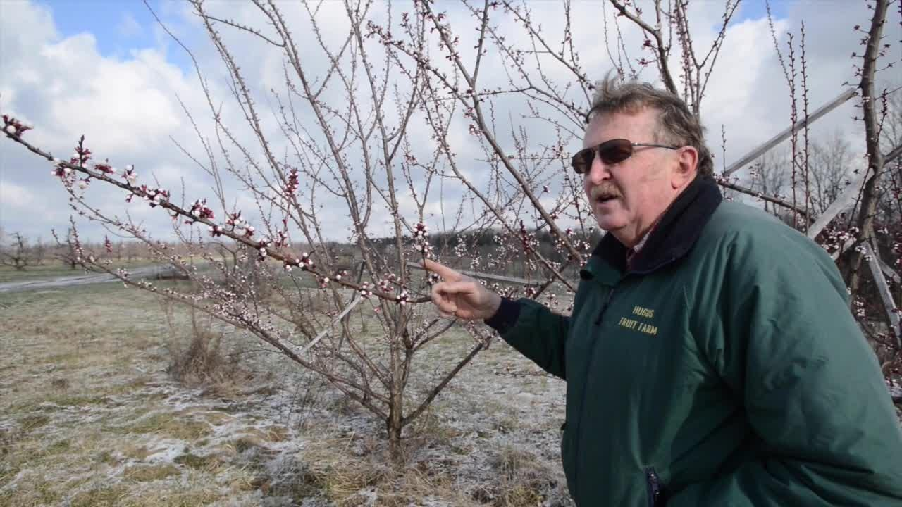 Warm winter could damage some crops