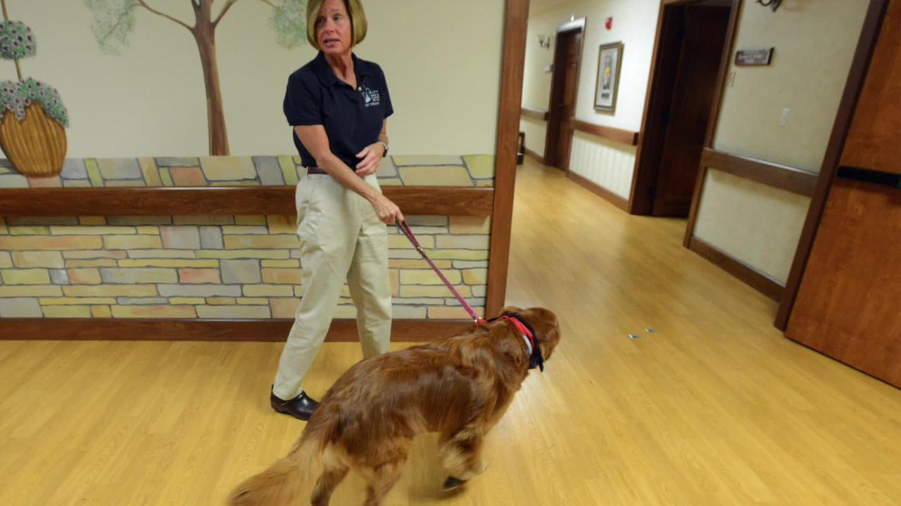 Brinkli is a therapy dog with FairHoPe Hospice and Palliative Care. She recently turned 10 years-old, but hasn't slowed down. She comes to work with her handler and owner Ellen Drewes to comfort patients and families. Matthew Berry/Eagle-Gazette