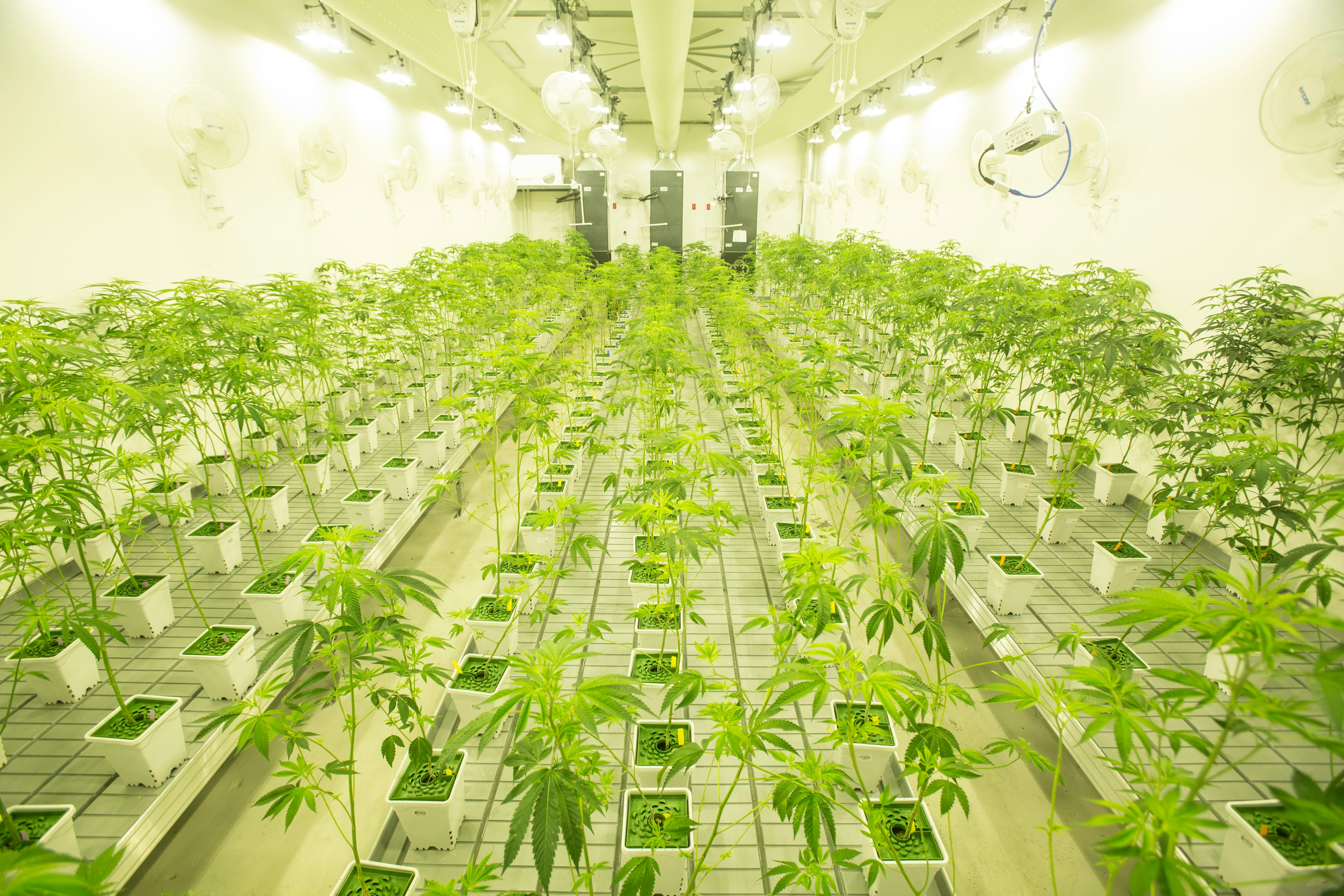 First marijuana cultivation facility in Southern California opens in ...