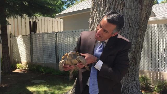 Nevada Weighs Changes To Reptile Collection Rules