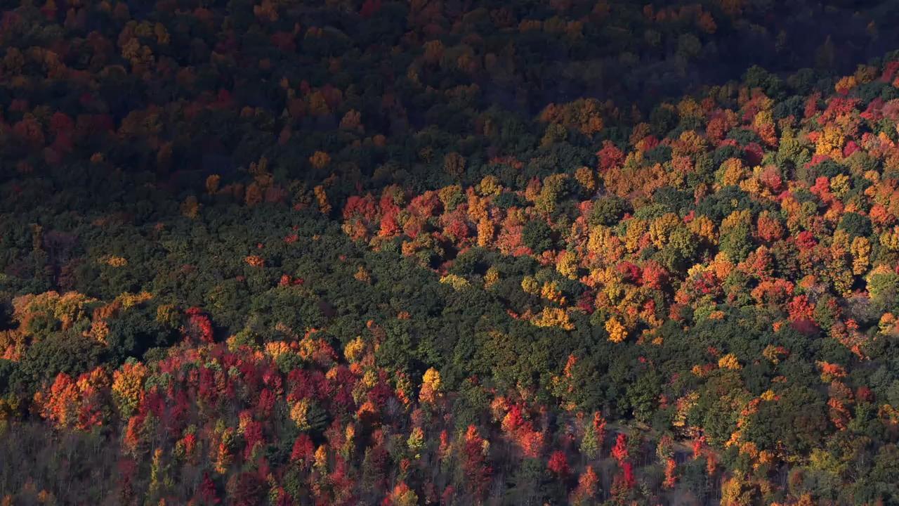 Upstate autumn aerials