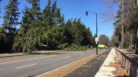 RAW video: High winds down trees, power lines.