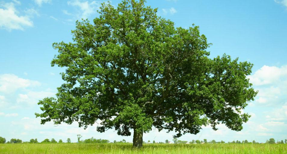 Laurie Broccolo answers frequently asked questions on how to properly care for your trees.