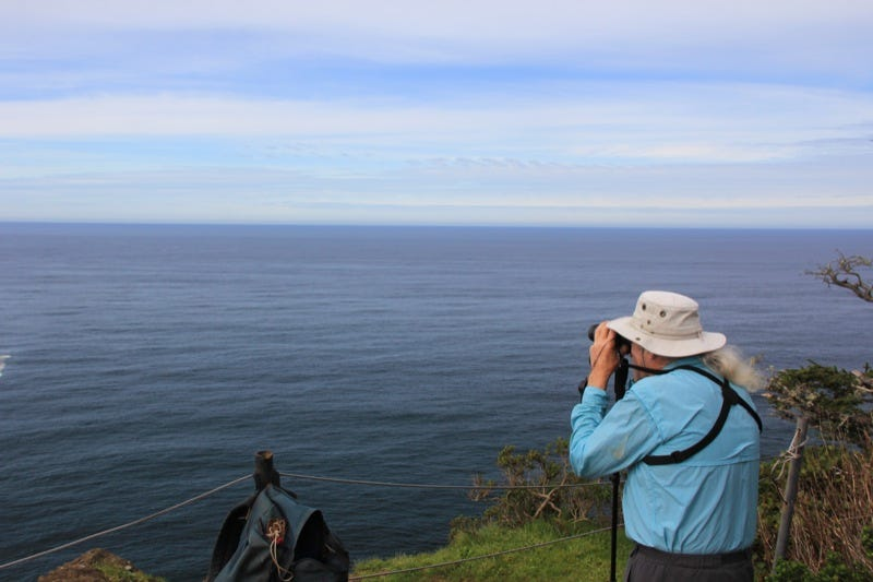 Cape Lookout whale watching hike