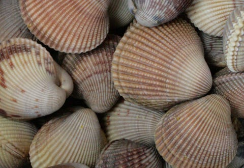 22K freshwater clams illegally taken from Millstone River for Brooklyn restaurant: cops