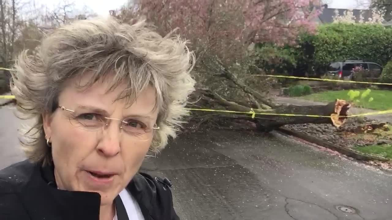 Tree down in South Salem
