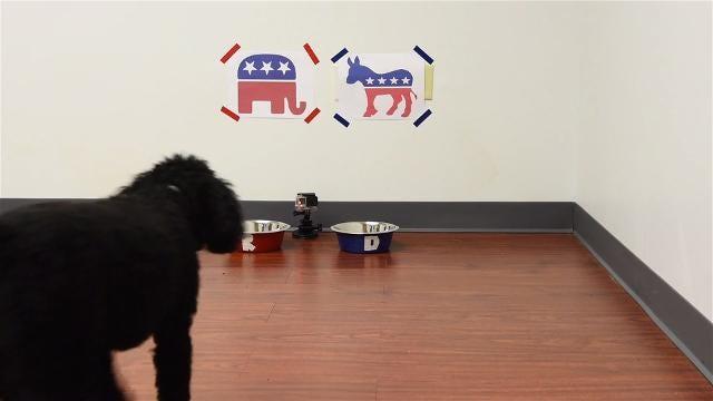 Amid the political quibble, a dose of political kibble