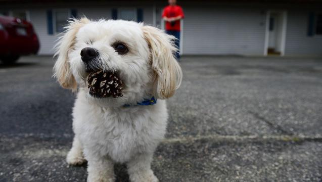 Watch: Meet Ocean City's internet sensation, the pine cone dog