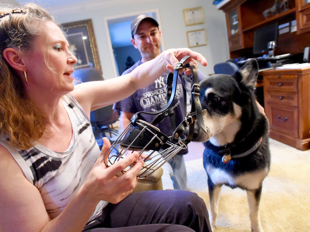 Apollo, a German Shepherd, finds himself wearing a muzzle and living on the Virginia Danger Dogs Registry after a run in with a postal worker.