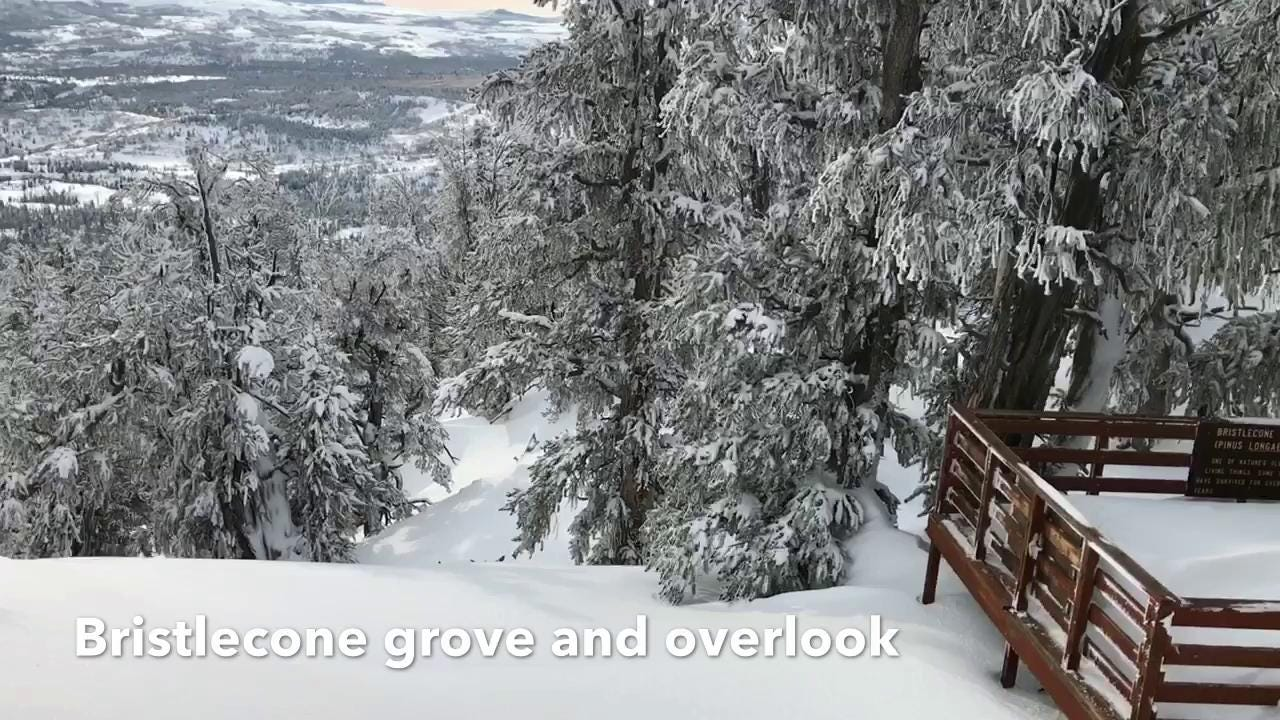 Brian Passey explores the Bristlecone Trail in the Dixie National Forest on Markagunt Plateau by snowshoe for his Backyard Ramblings column.