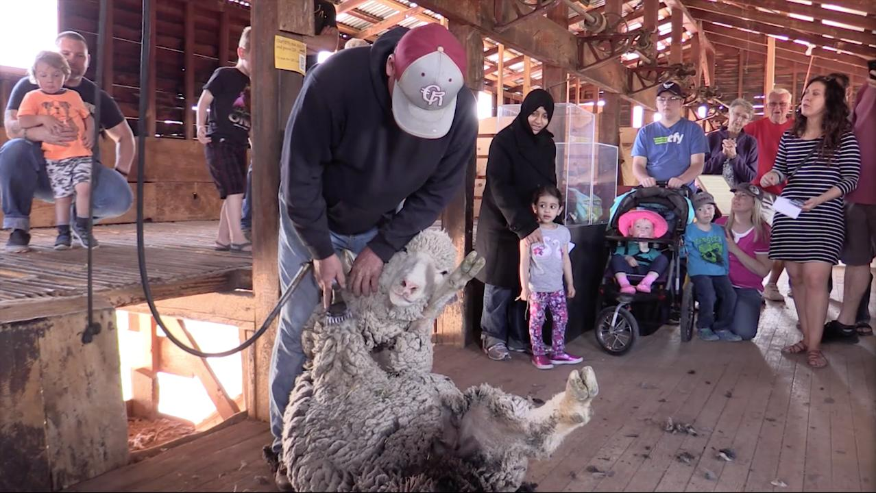 The Frontier Homestead State Park hosted its fifth annual Sheep to Shawl event, Saturday, Mar. 18, 2017.