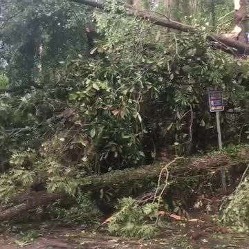 Clearing fallen trees after Hermine
