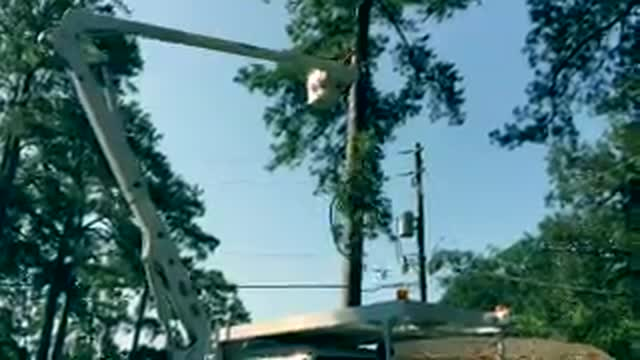 How do you remove tree limbs near power lines?