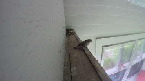 Birds: When your nest is their nest