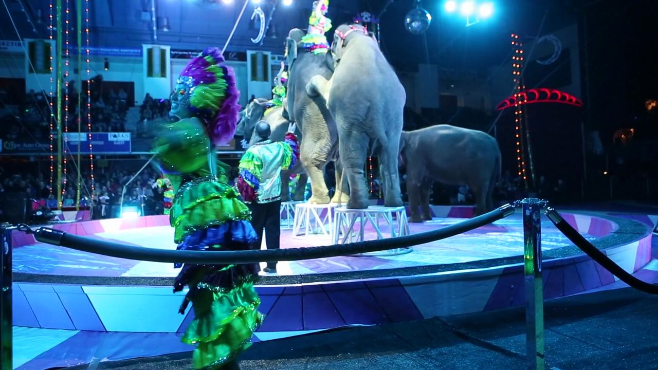 7 great things to do through april hamilton star circus home show