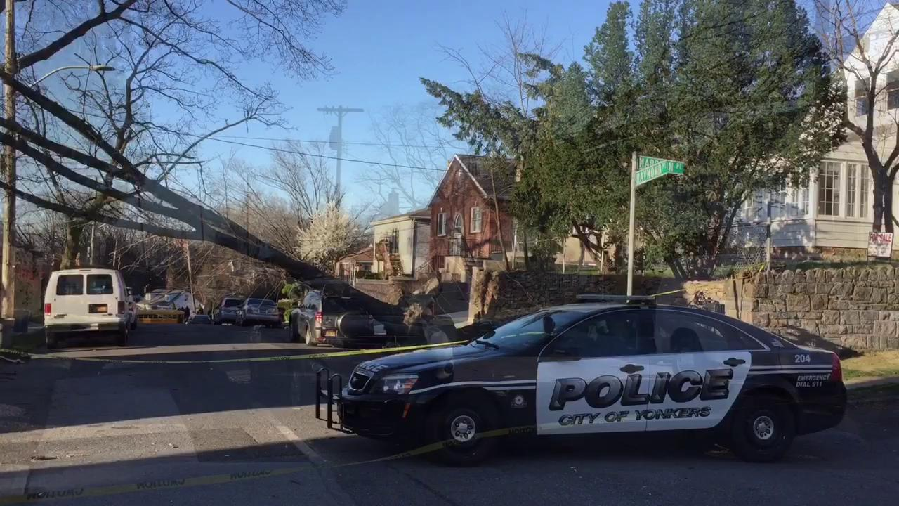 Strong winds knock down tree in Yonkers