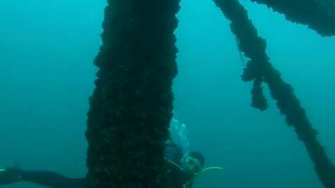 Get an underwater look at the wrecks of Lake Michigan. (August 2014)