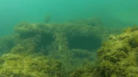 Get an underwater look at the wrecks of Lake Michigan. (September 2014)