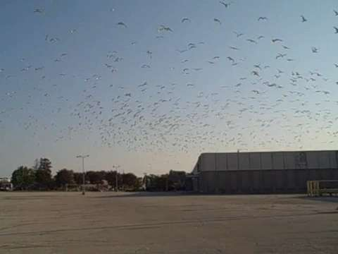 In 2011, a group of  more than 2,000 gulls made the vacant Lakeview Centre mall in Manitowoc home. (July 2011)