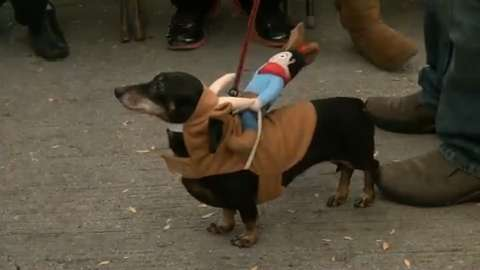 Al & Al's Steinhaus in Sheboygan hosted it's seventh annual Oktoberfest event, which included wiener dog races and costume contest. (October 4, 2014)