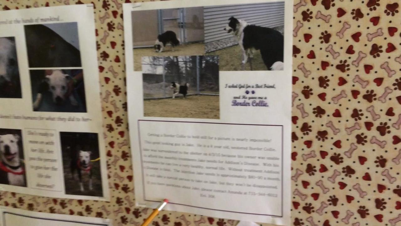 Inside The Humane Society Of Portage County