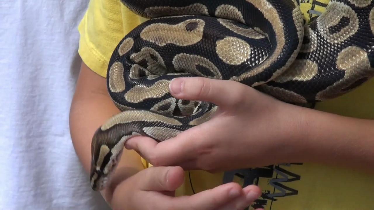 Zoo Nooz: Traveling Snake Show