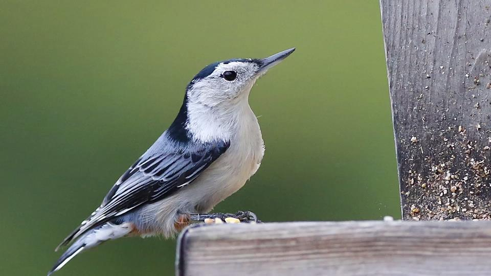 USA TODAY NETWORK-Wisconsin photographer Doug Raflik captured this bird on a local bird feeder.