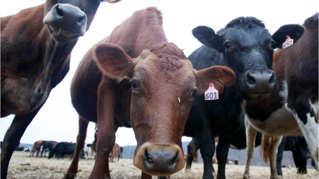 How an import tax to Canada is hurting Wisconsin and New York dairy farmers.