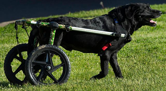 Wisconsin nonprofit Gunnar\'s Wheels gives wheelchairs to needy pets